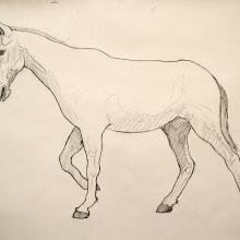 mule sketch